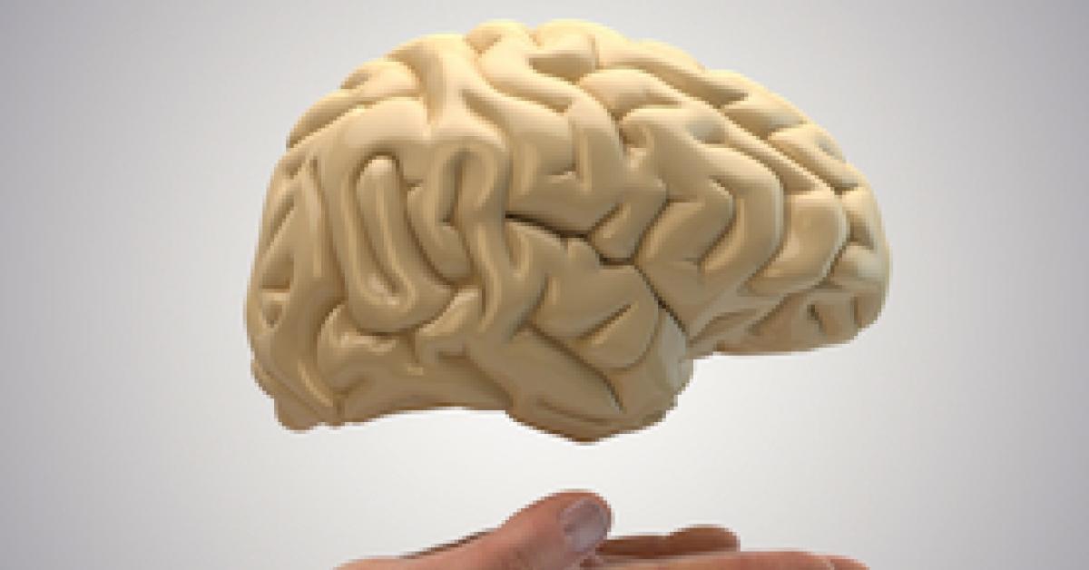 новый картинка мозги в руке сразу